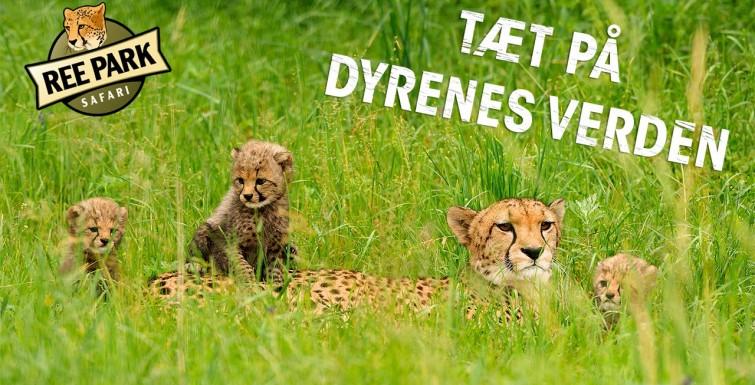 Udflugt 2./9. kl. 8.30 til Ree Safaripark